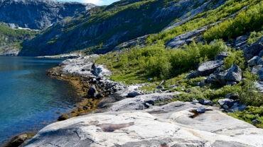 Fjæretur langs Elvefjorden