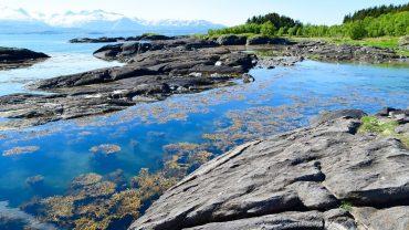 Hovden i Bodø