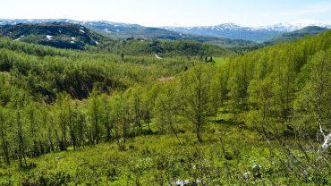 Landskap mellom Misvær og Rognan