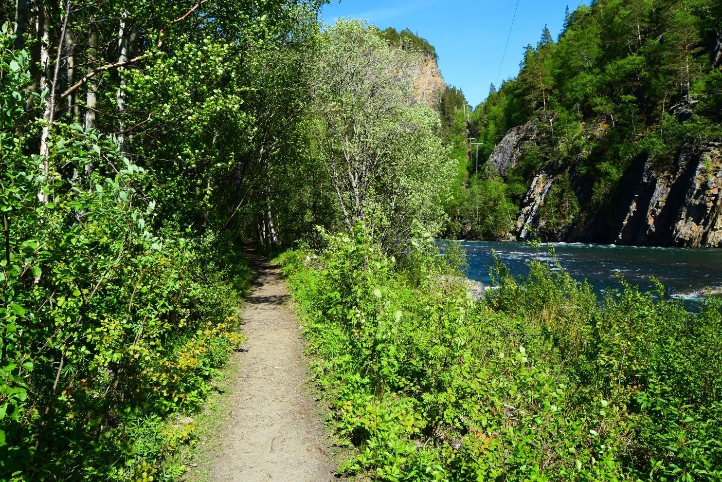 Turstien som går langs Junkerdalselva