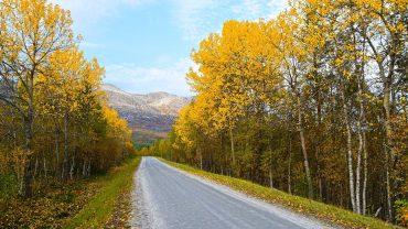 Høstfarger langs Gjerdalsveien i Sørfold