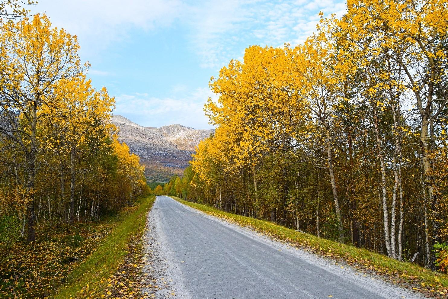 Gjerdalsveien Skog Fjell