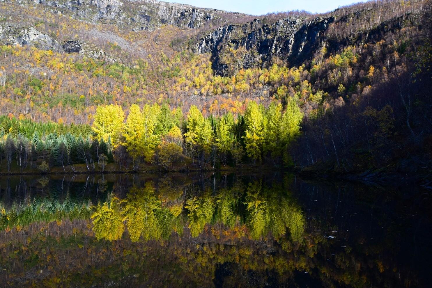 Skog og vatn på vei mot Sulitjelma