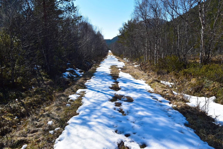 Skogsvei på Straumøya en vårdag