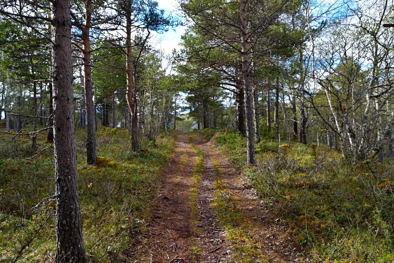 Skogstur ved Børelva en vårdag