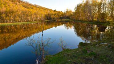 Høstdag i skogen på Knaplundsøya