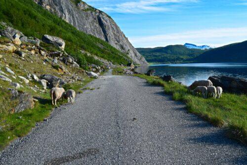 Gammelveien mot Misvær