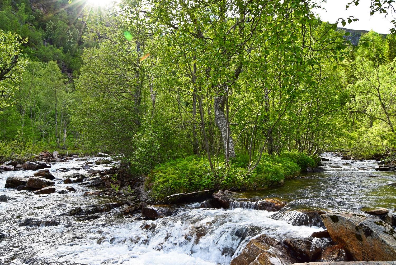 Elv og skog i Øvre Valnesfjord
