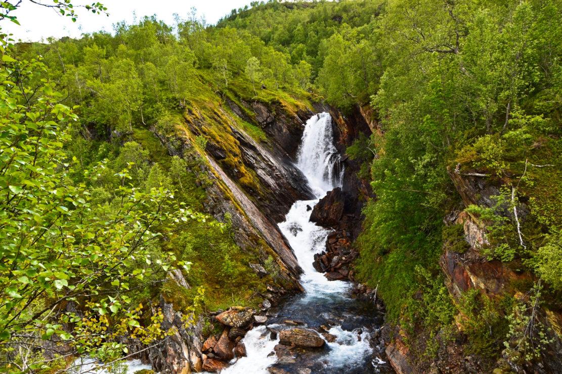 Foss Skog Valnesfjord