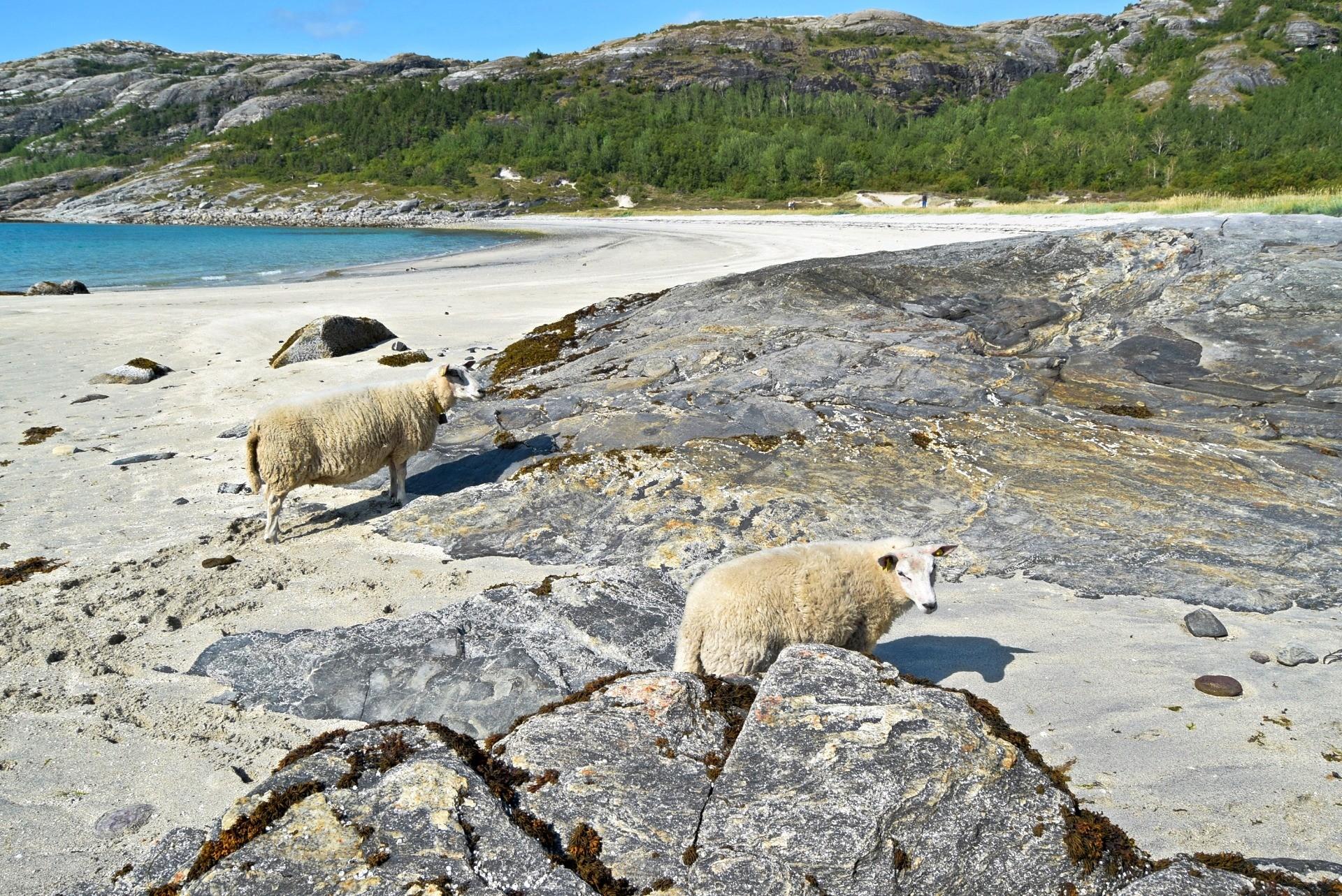 Auvika strand i Bodø