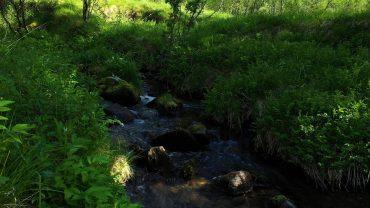 Lyden av en bekk i skogen