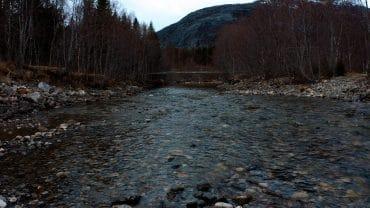 Bobblende elv i skogen