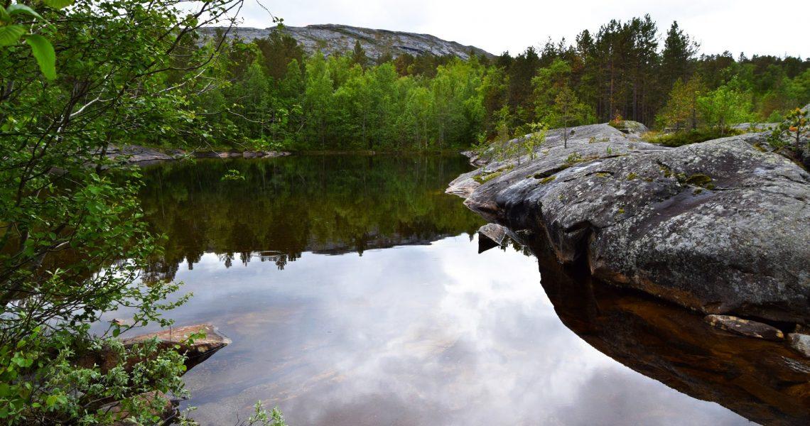 Heggmokulpen i Bodø