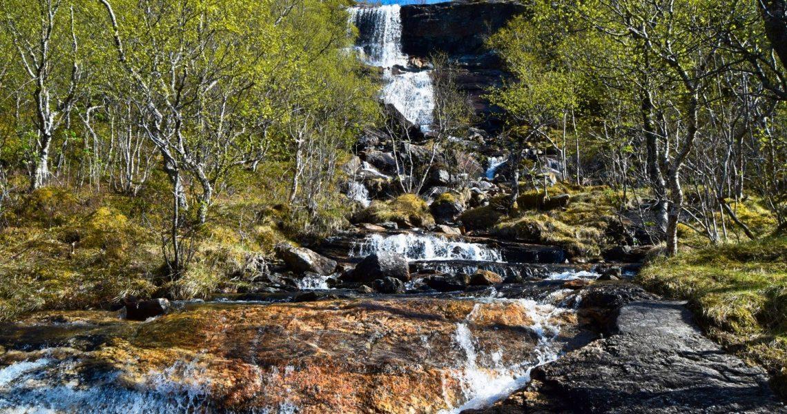 Skogstur på Skaug i Bodø