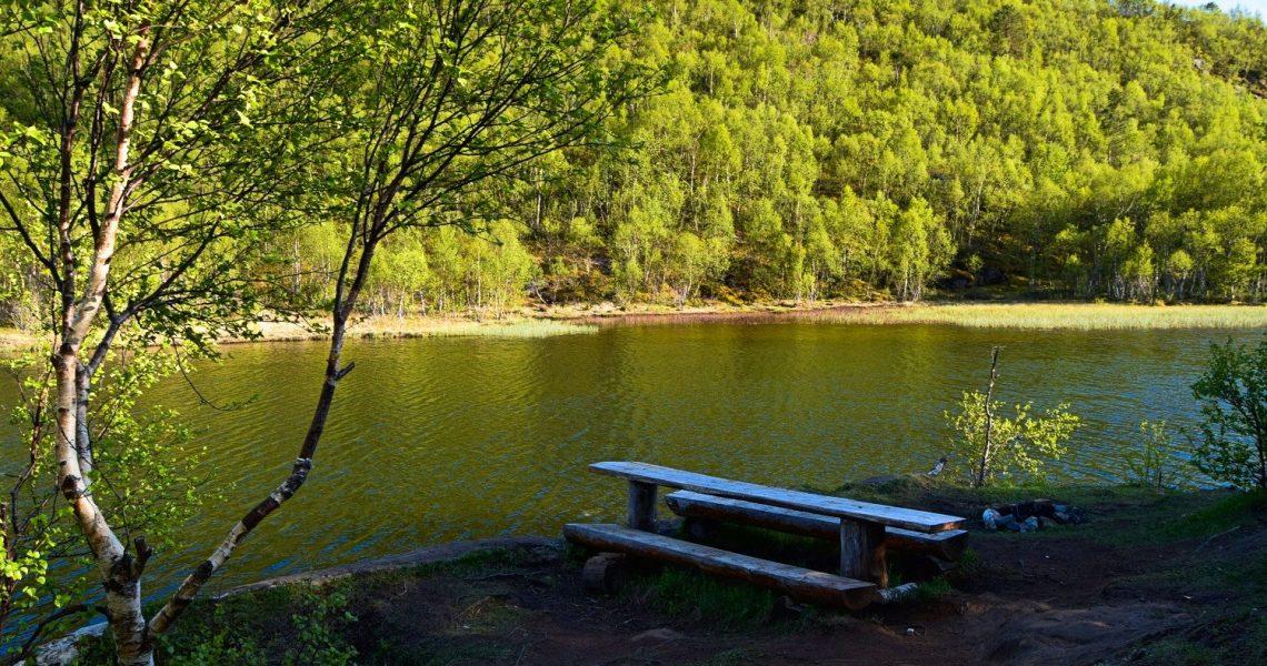 Skogstur på Knaplundsøya