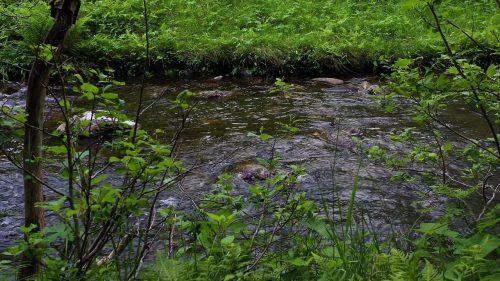 Lyden av ei elv som renner i skogen