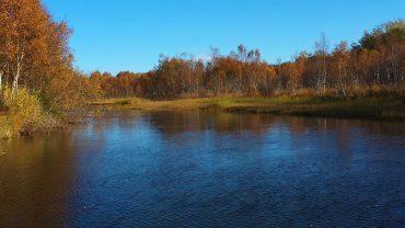 Høstskog med elv og fuglelyder