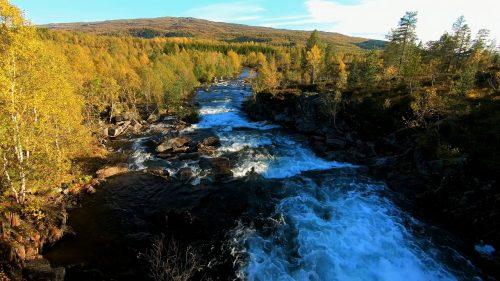 Lyden av ei sterk elv i skogen