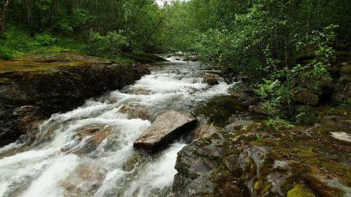 Naturlyden av ei elv i skogen