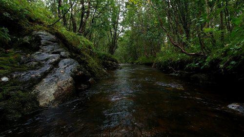Regn i skogen