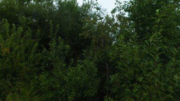 Regn natur lyd