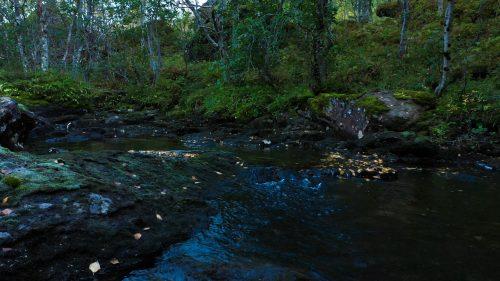 Rolig elv i høstskogen