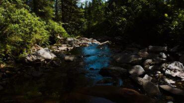 Rolig elv i skogen