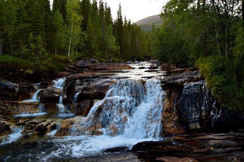 Skoger og elver i Salten