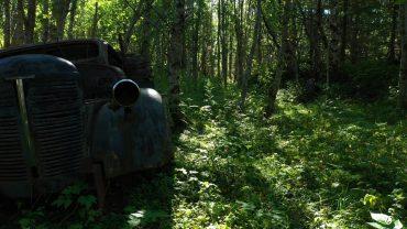 Skogslyder med naturvideo