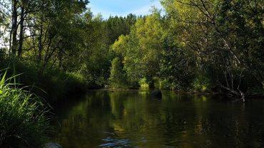 Skogslyder med elv og fugler