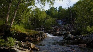 Sommerlandskap med naturlyder