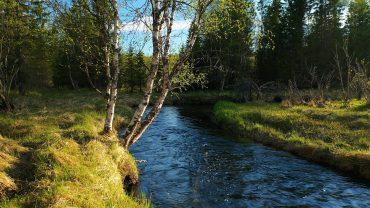 Vårskog med lyden av fugler og ei elv